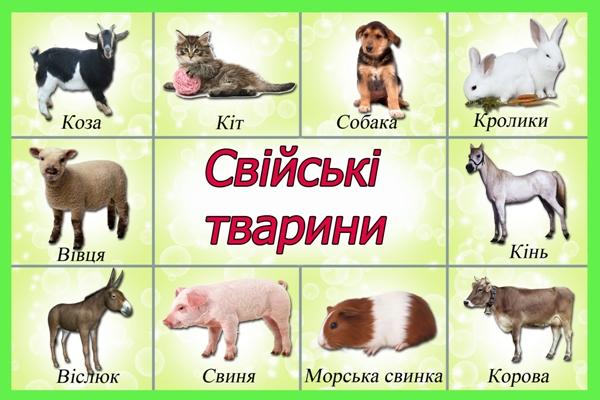 Свійські тварини
